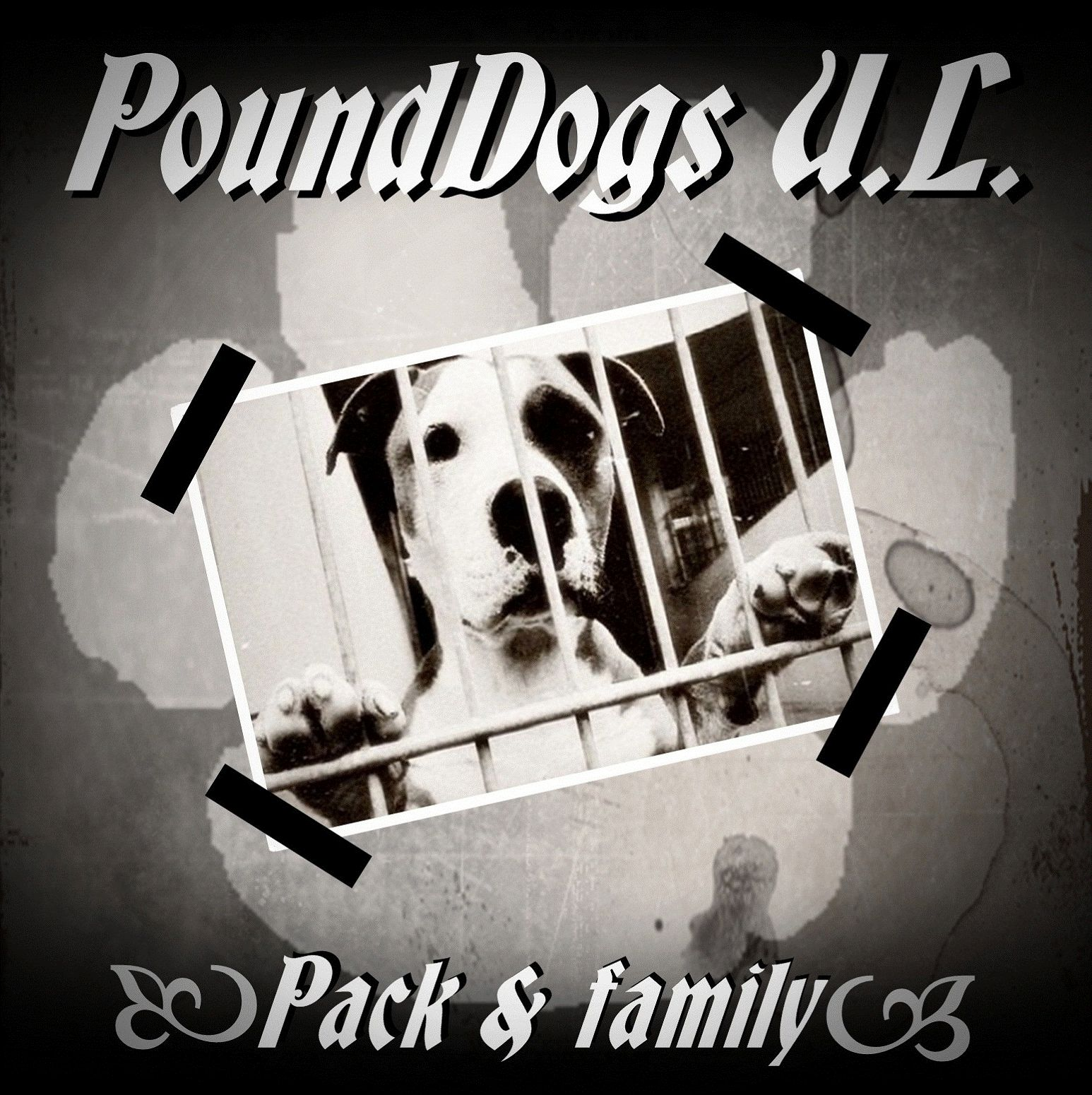 PoundDogs U.L. ? Pack&family MCD